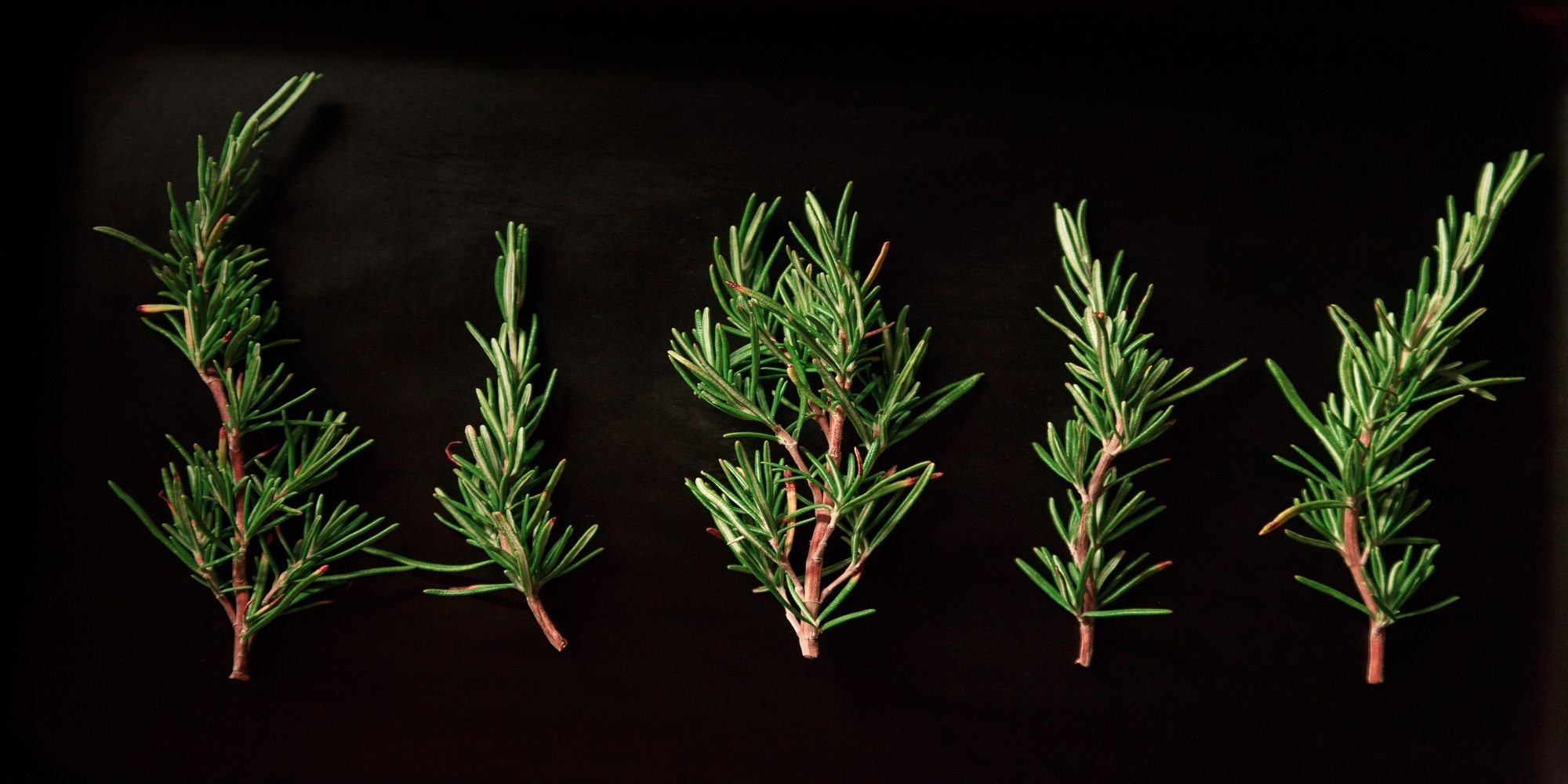 5 sprigs of rosemary behind black background