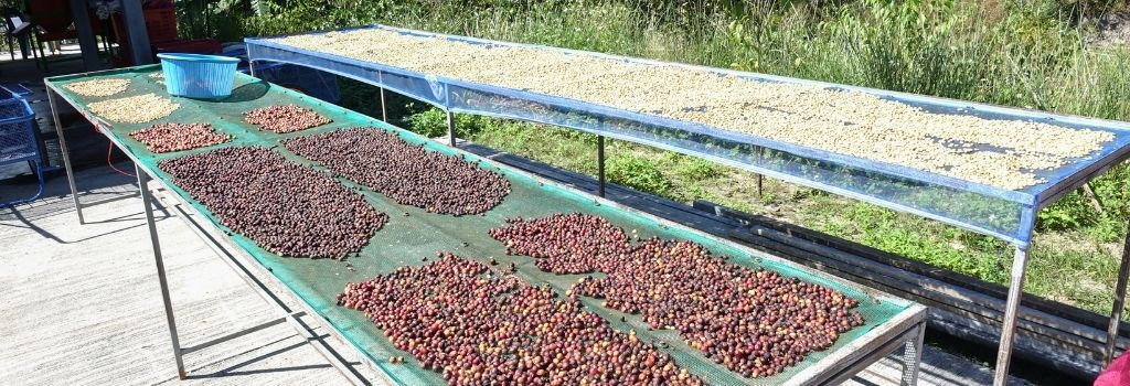 coffee processing, specialty coffee, natural process